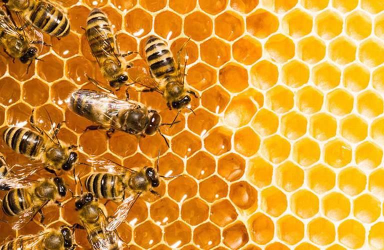 Image result for guanajuato aprobó una ley para proteger a las colonias de abejas